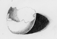 drawing of an eggshell