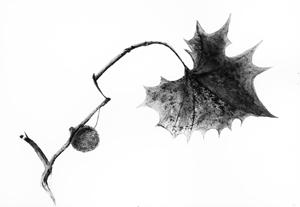 Leaf1-300