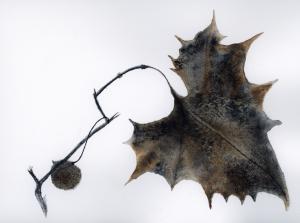 Leaf2-cropped-300