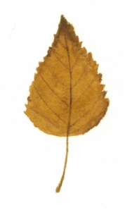 Golden birch leaf