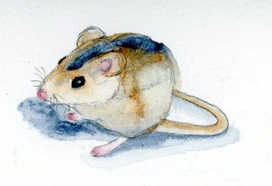Watercolor Field Mouse